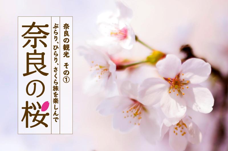 奈良の観光「奈良の桜」